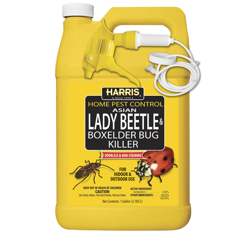128 oz. Asian Lady Beetle & Box Elder Bug Killer